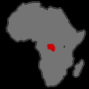 Bonobo distribution
