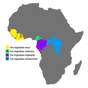 Chimpanzee distribution