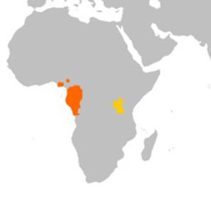 Gorilla distribution