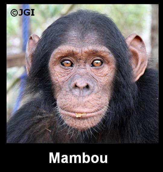 Mambou