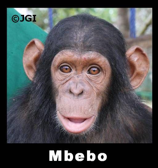 Mbebo