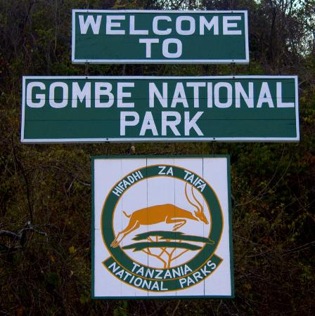 gombe-national-park-goodall-institute