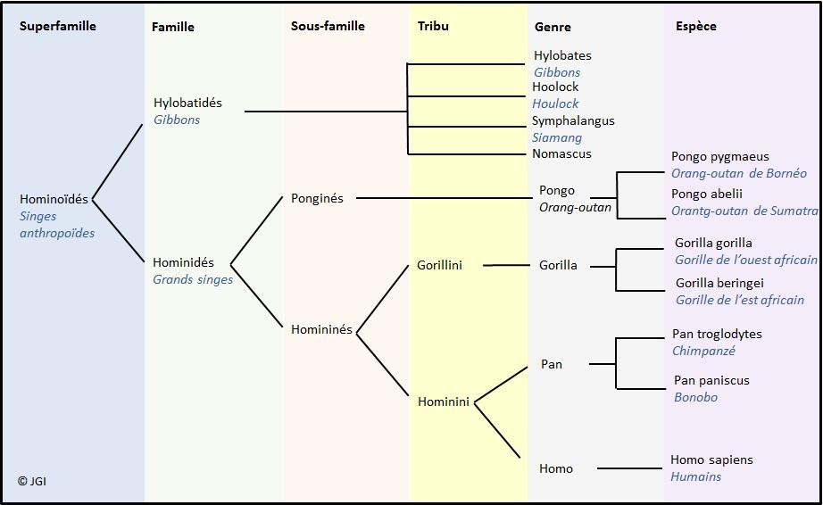 phylogenie