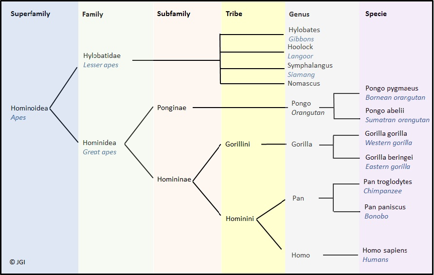 fylogenese