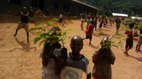 burundi-reforestation-jane-goodall