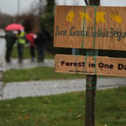 Forest in One Day 2018 - Alken