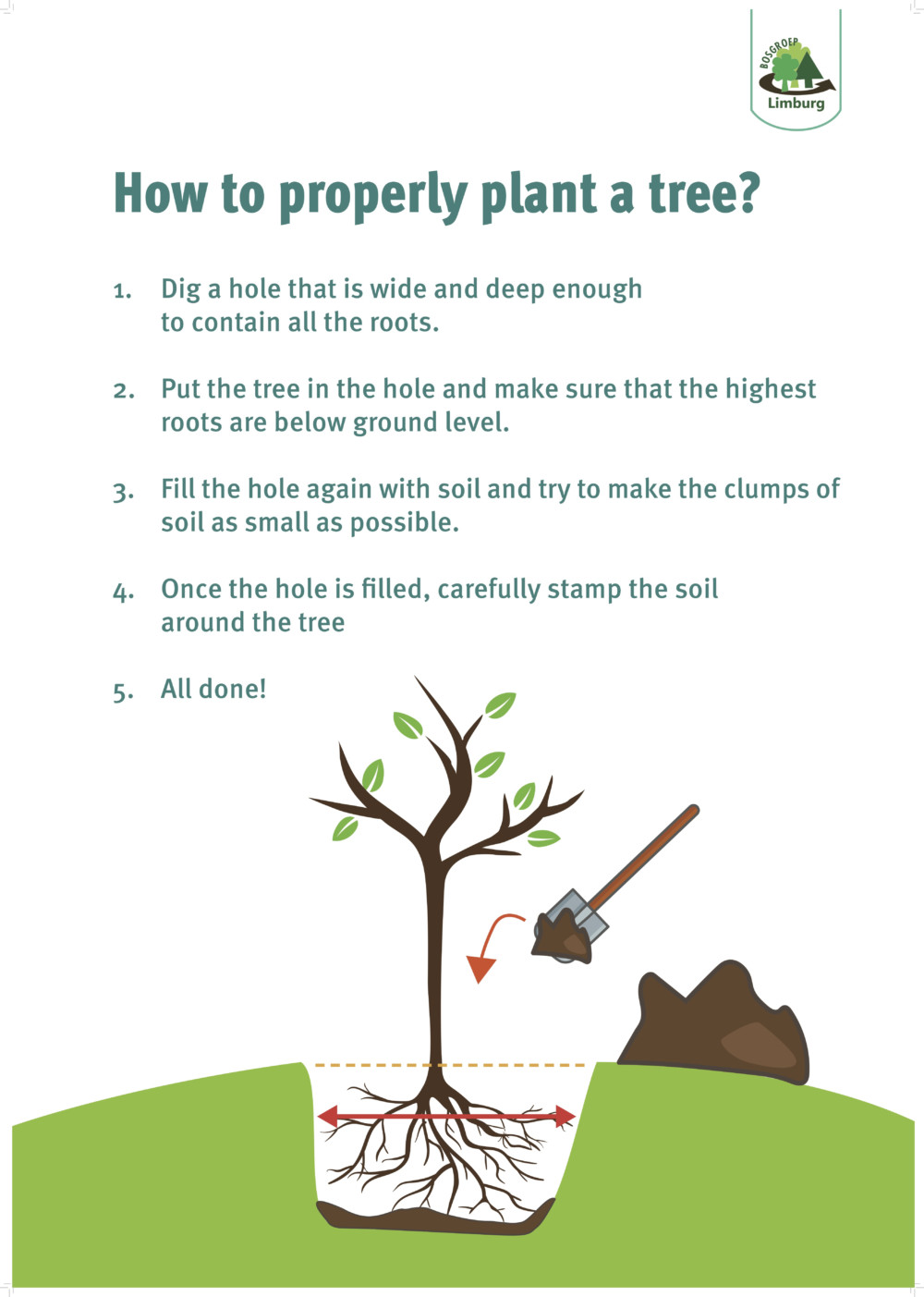 how to plant a tree bosgroep EN
