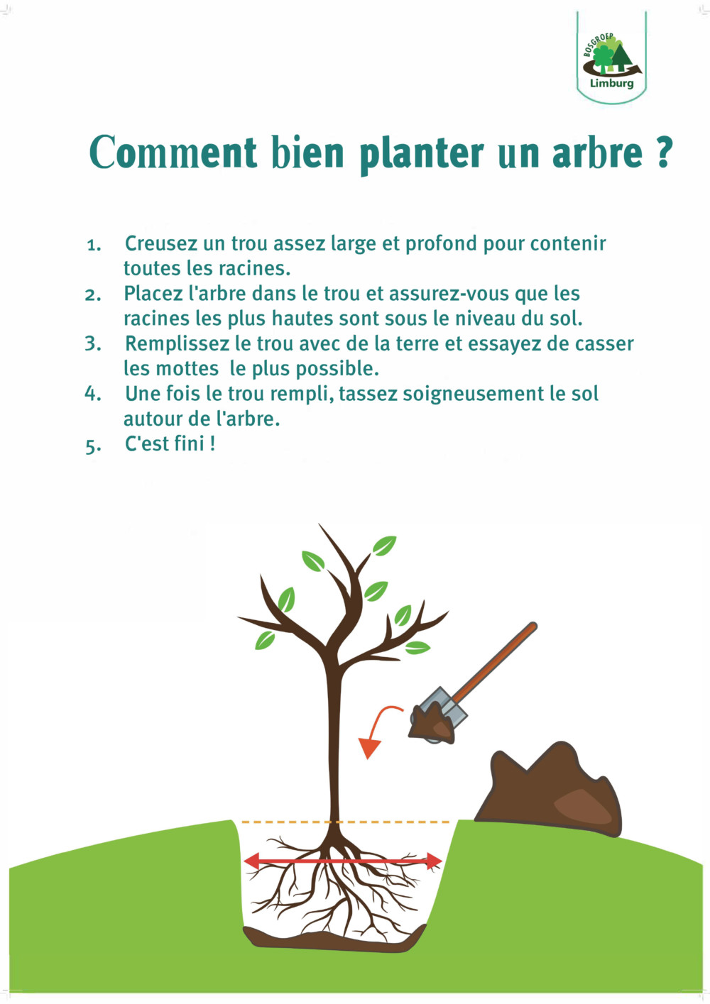 how to plant a tree bosgroep FR