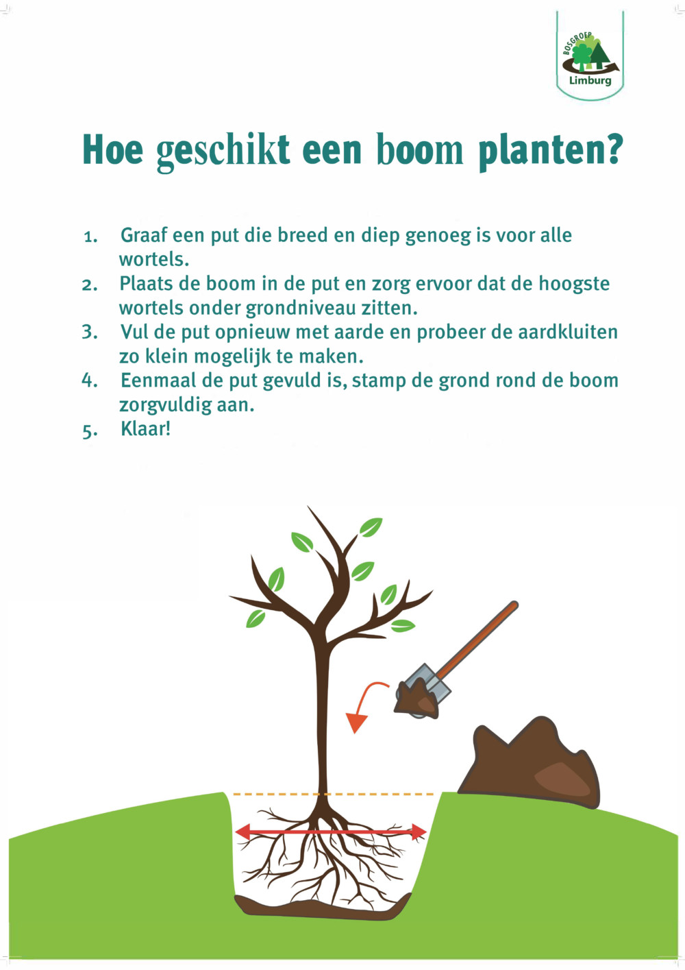 how to plant a tree bosgroep NL