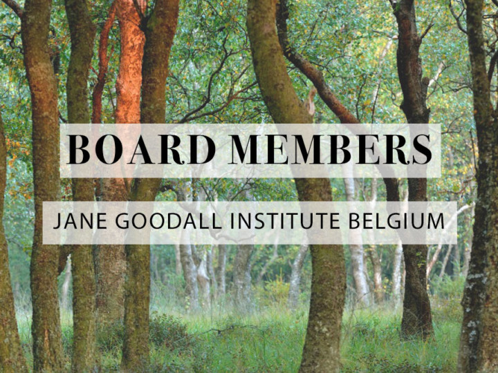 We are looking for new Board Members