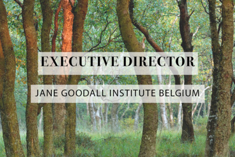 executive director jane goodall belgium