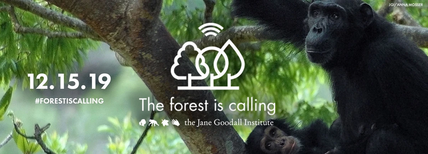 forestiscalling-jane-goodall-institute-2019